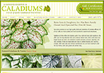 Bates Sons & Daughters - Caladiums Online